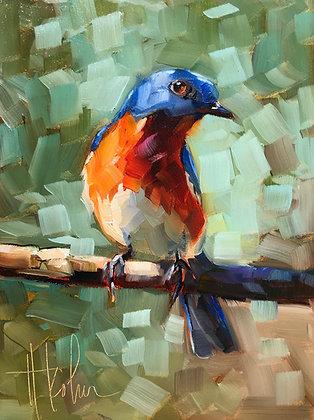 Bashful Bluebird
