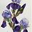 Thumbnail: First Iris