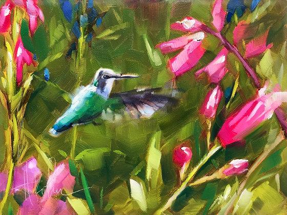 Hummingbird, Rotary Gardens