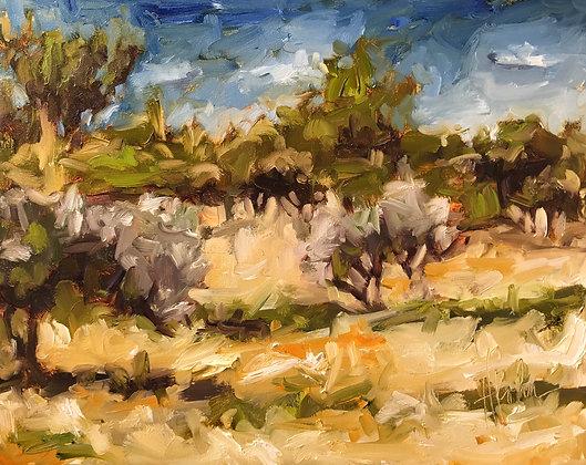 Olive Groves at St. Rémy