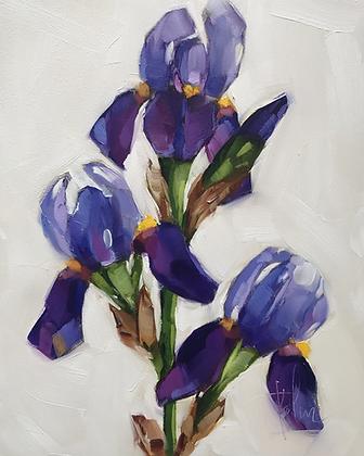 Irises for Kathy 💜