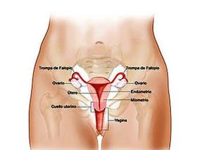 Cancer del Cuello Uterino Aspectos generales