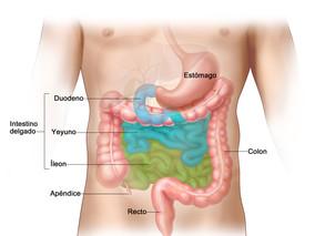 Tumores carcinoides gastrointestinales.