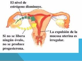 Menopausia y Perimenopausia