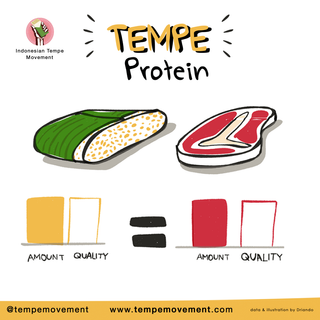 Tempe_Protein.png