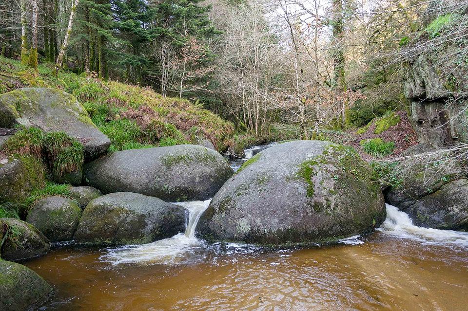Marre aux sangliers, forêt d'Huelgoat (Finistère, Bretagne)