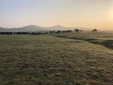 Eery Fog Gather, amid poachers.
