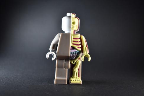 Micro Anatomy