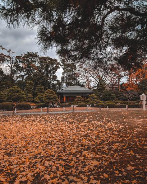 Kyoto Fall
