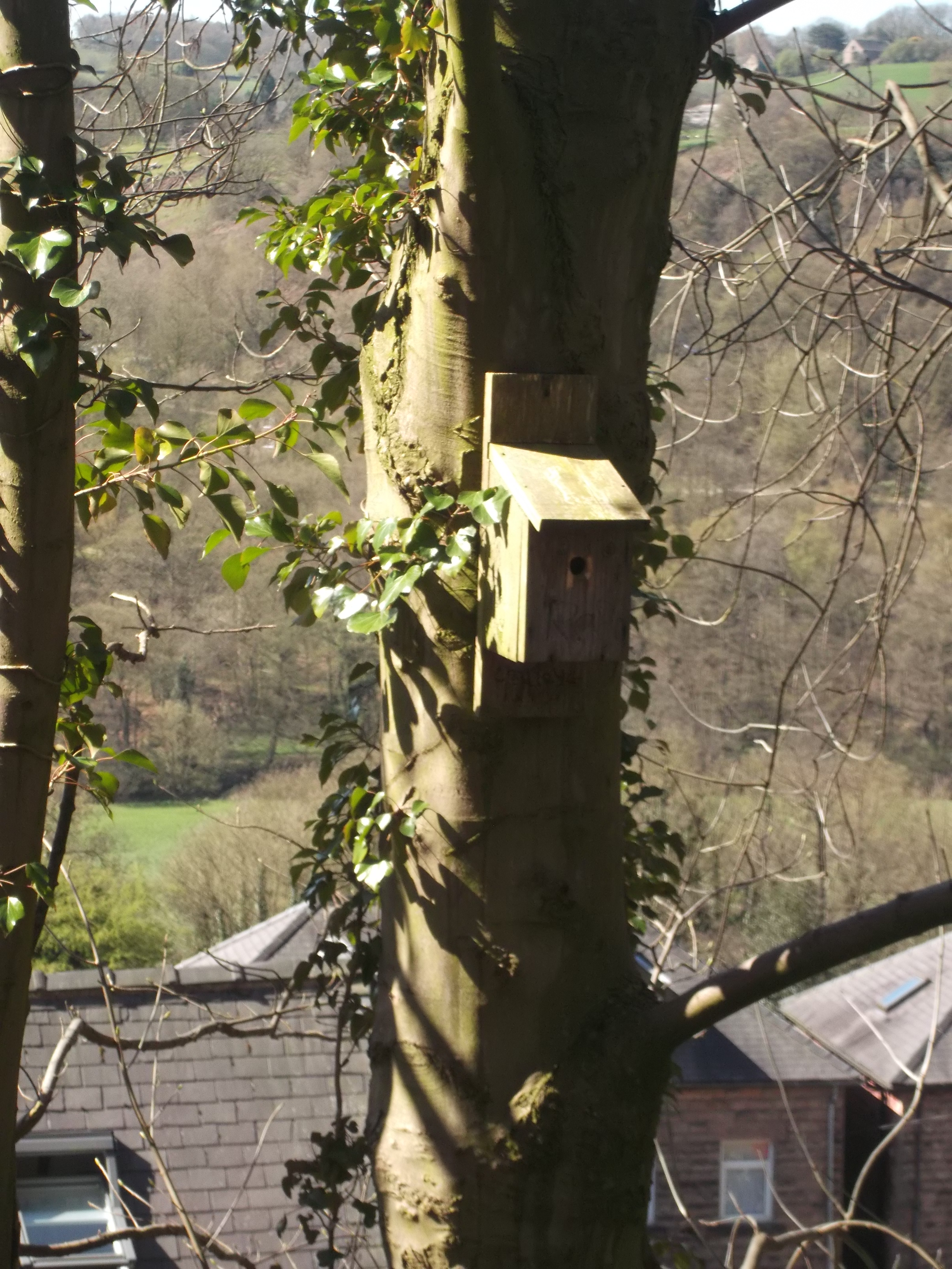 Forest School -nests