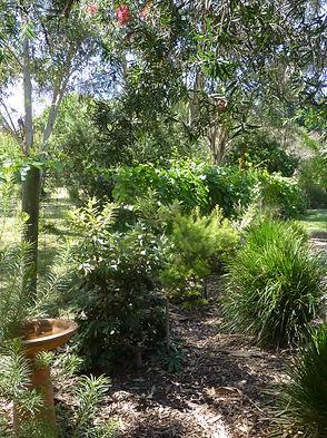Flourishing bird attracting garden