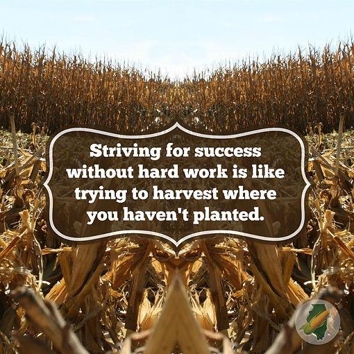 success harvest.jpg