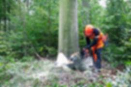 felling-tree 380.jpg