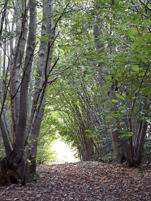 Walk in woods.jpg