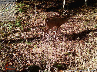 hunting property leases in VA