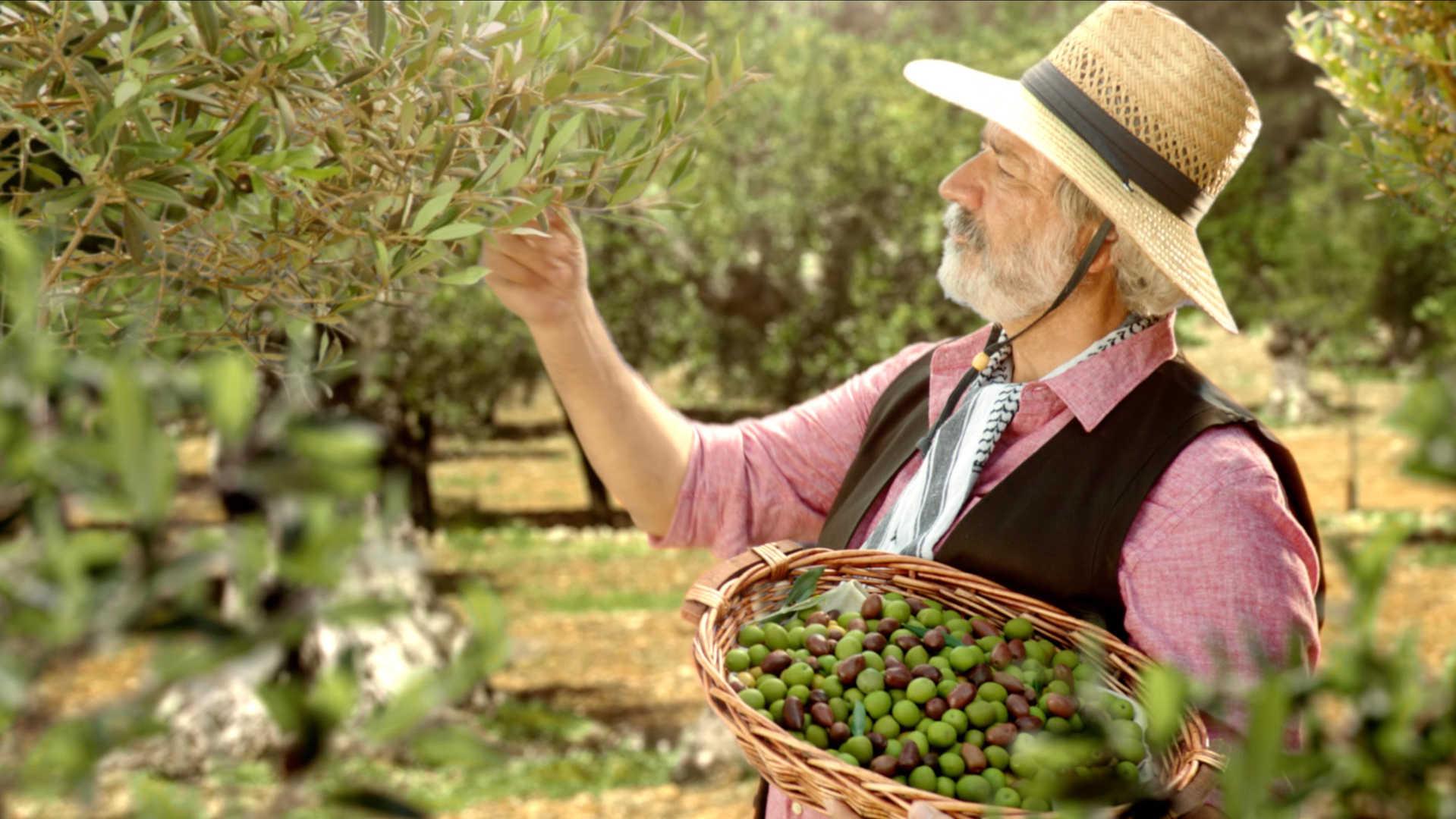 Pompeian Olive Oil - Farm to Table