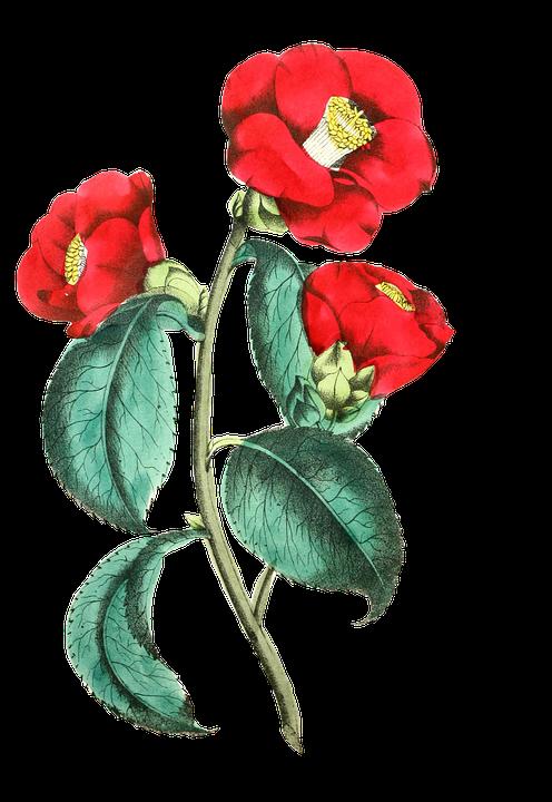 kisspng-flower-rose-floral-design-common