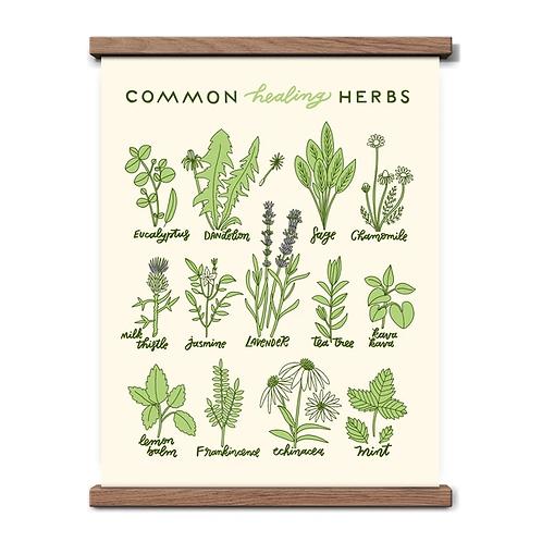Healing Herbs 11x14 Print