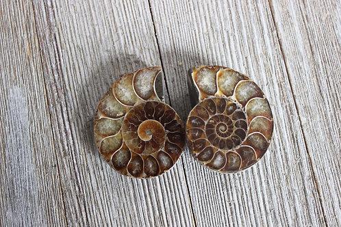 Mini Ammonite Fossils / Crystals / Gemstones