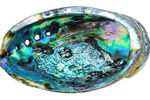 Red Abalone Shell Large 6 inch