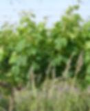 crbst_1er_20essai_20122.jpg