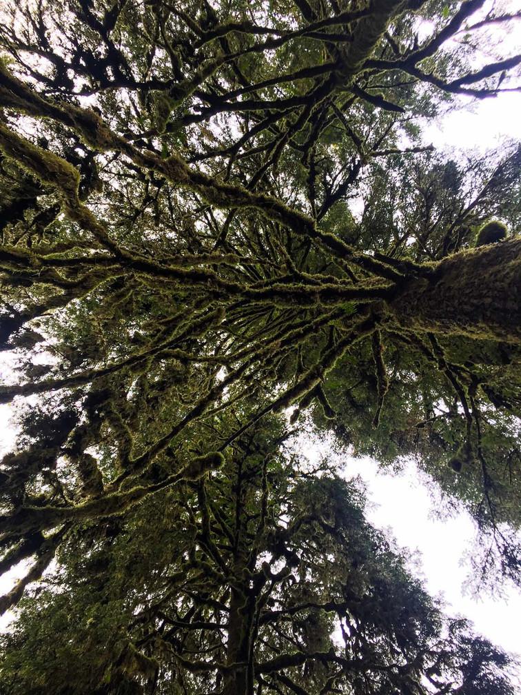 Vancouver Island Diaries