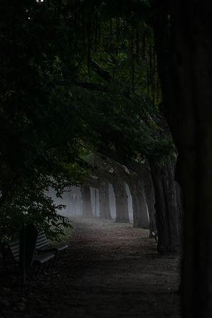 AMSTERDAM-VONDELPARK-MORNING-MIST-TREES-