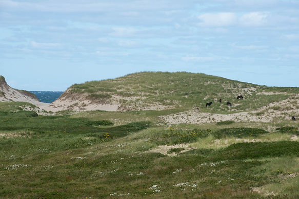 Sand Dunes and Horses - Sable Island