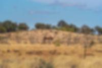 Kings-Creek-Lodge-Australia-City-Travel-