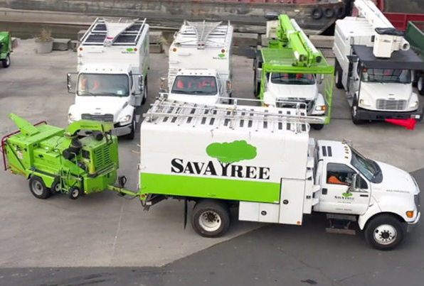 Bedford Hills' SavATree acquires New Canaan's Pauley Tree & Lawn Care