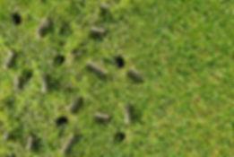 lawn-aeration-plugs-w.jpg