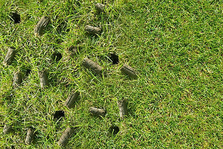 lawn-aeration-plugs-w.jpg
