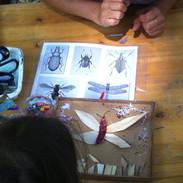 droles d'insectes.jpg