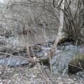 Река Лобня (Лаба). Субботник.