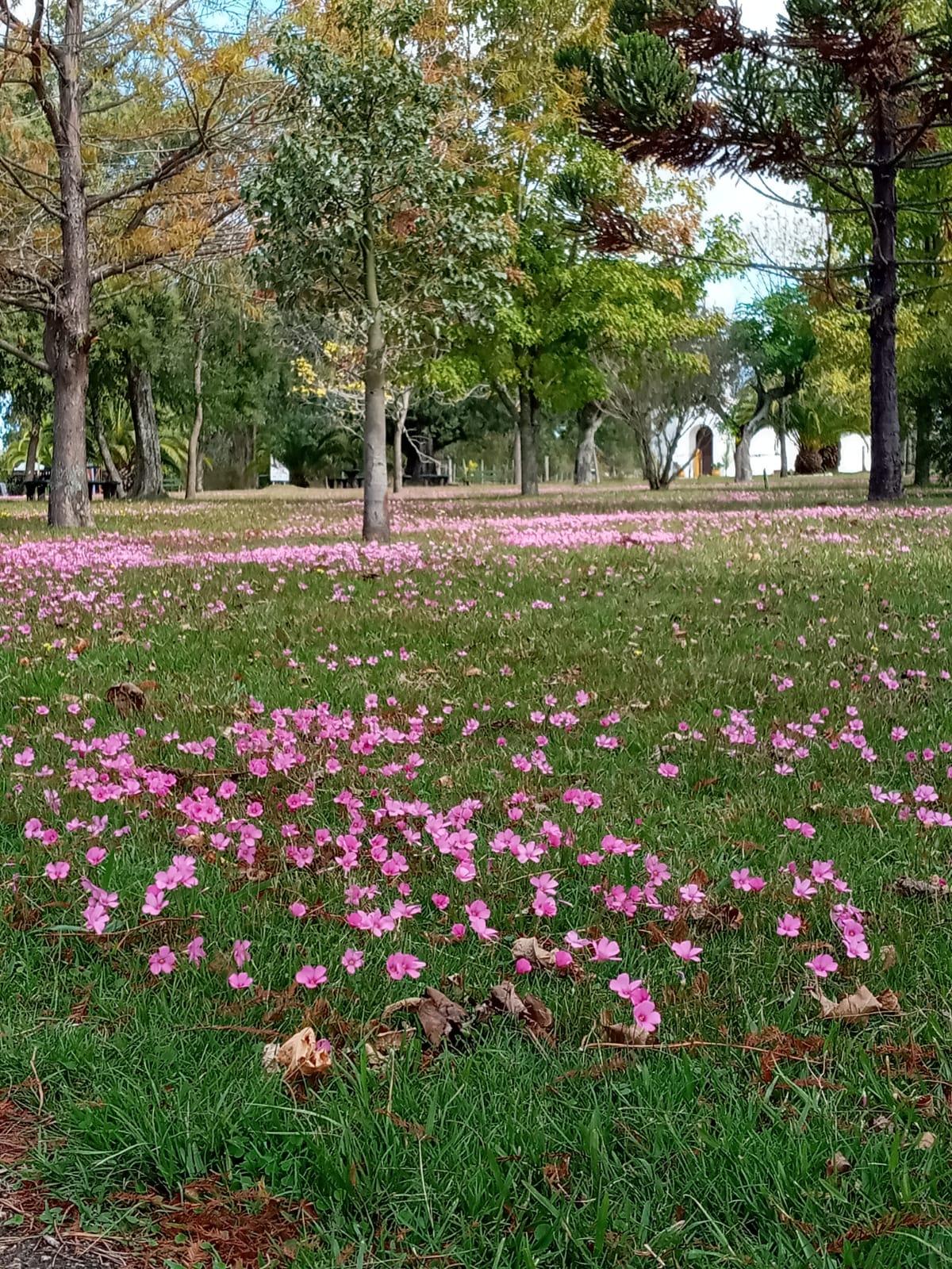 florcitas plaza