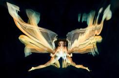 Papillon ange