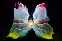 Papillon chinois