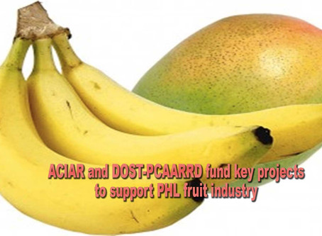 ACIAR and DOST-PCAARRD fund key projects to support PHL fruit industry