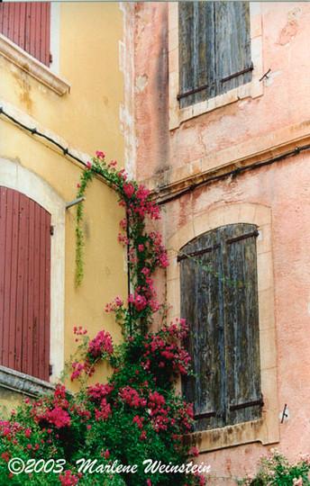 Rousillon Roses