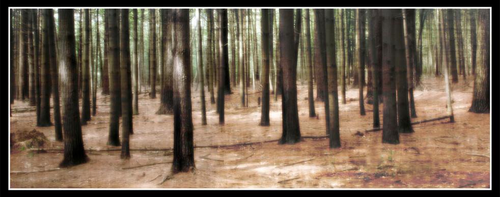 Prosser Pines