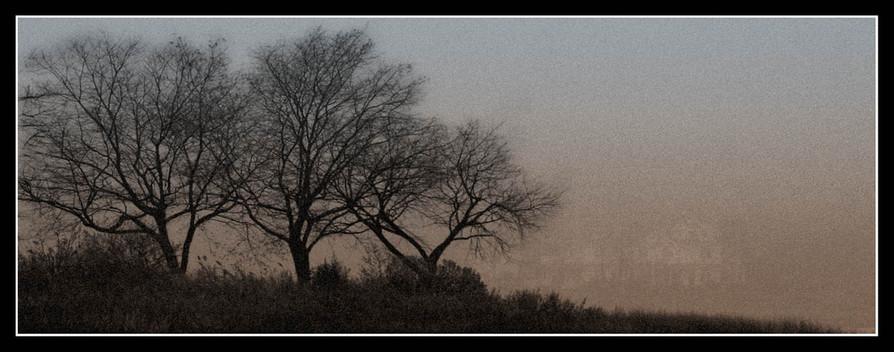 Bare Trees #3
