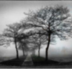 Black & white photograph of stark trees in the fog