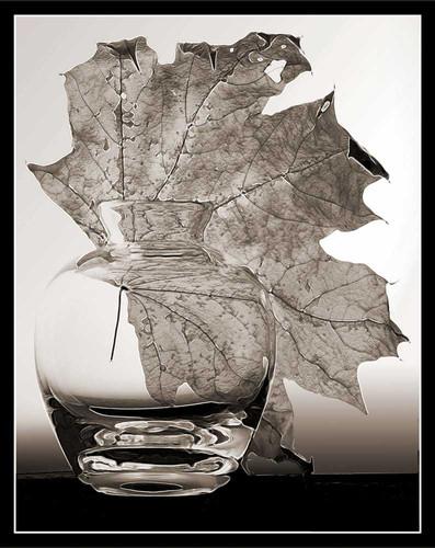 Still Life with Leaf & Vase