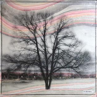 Lone Winter Tree