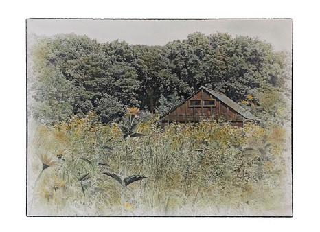 Summer Perennials, Avalon