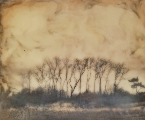 Bare Trees #2 (NFS)