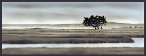 Windswept (Shelter Island)