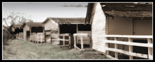 Memories of Old Field Farm