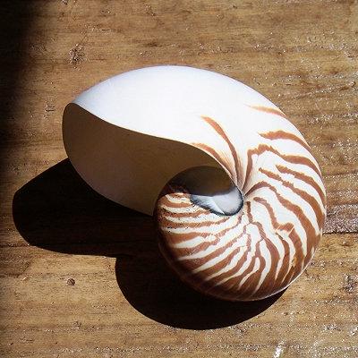 Natural Nautilus