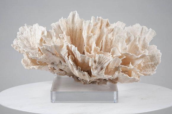 Poca Coral on Acrylic Base